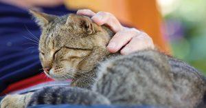 MSN 345-Furry Critters Senior Cats