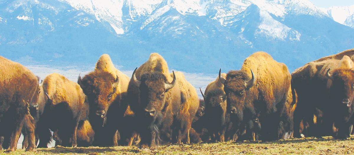 Montana's National Bison Range