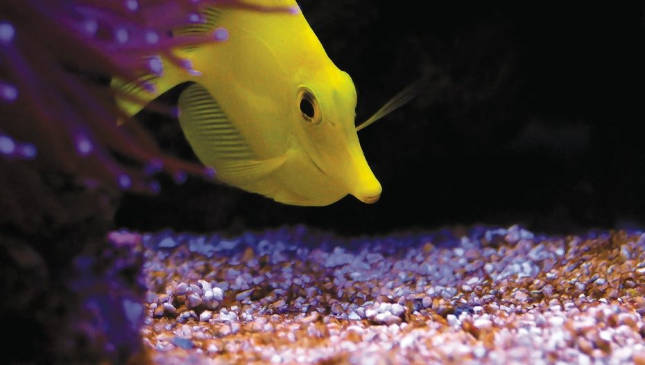 Happy Fish Tale