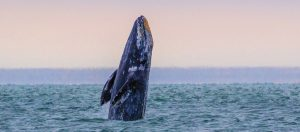 Oregon Whale Watching