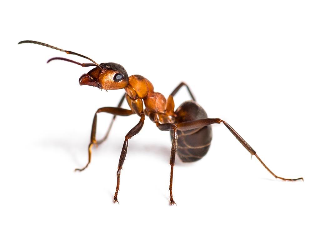 Who's Afraid of the Big Bad Ants? — Them!