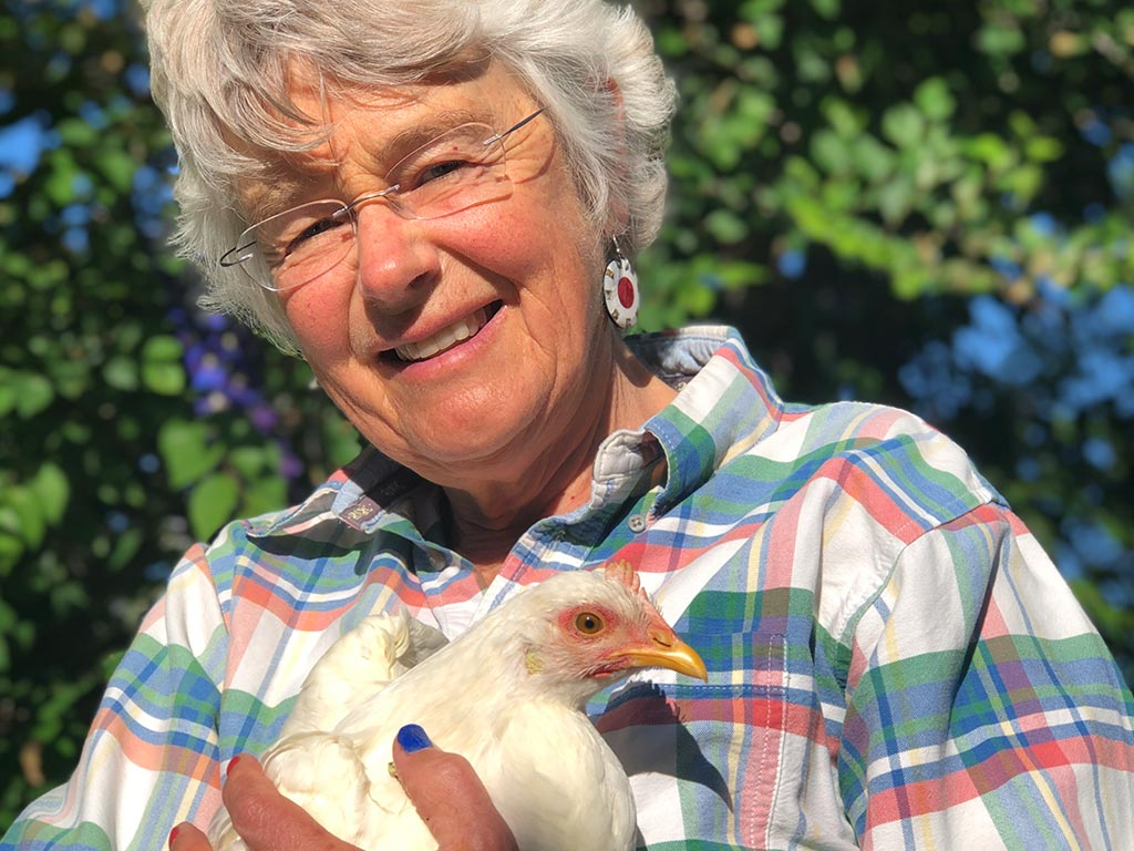 Here Chick, Chick, Chick — The Urban Chickens Craze