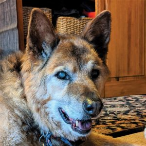 Valkyrie the 18-year-old rescue dog