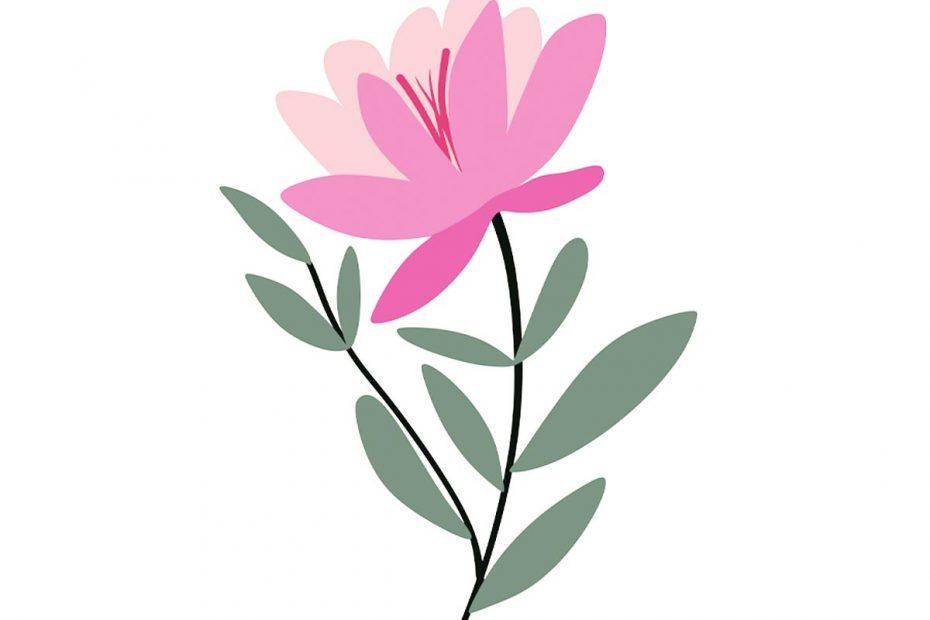 illustration of a pink flower