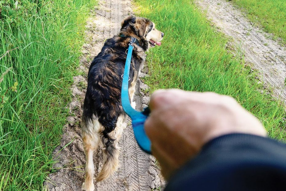 Photo of walking a dog from the perspective of the dog walker.