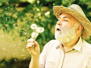 Bearded senior man with straw hat blows on a dandelion