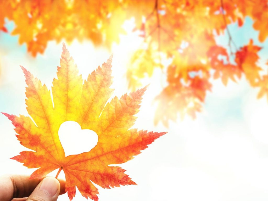 Photo of a hand holding up a fall leaf with a heart cut out in it, symbolizing a longing to share
